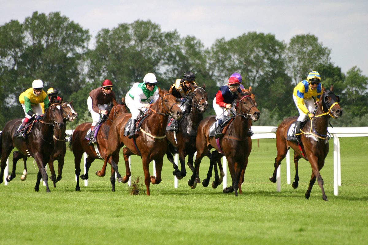 The Structure and Patterns of Horse Racing The Beginner's Guide
